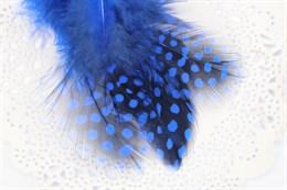 Перо цесарки, Blue