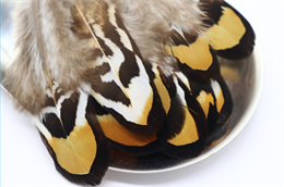 Перо фазана
