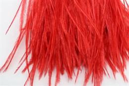 Перо страуса на ленте, Red