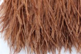 Перо страуса на ленте, Brown